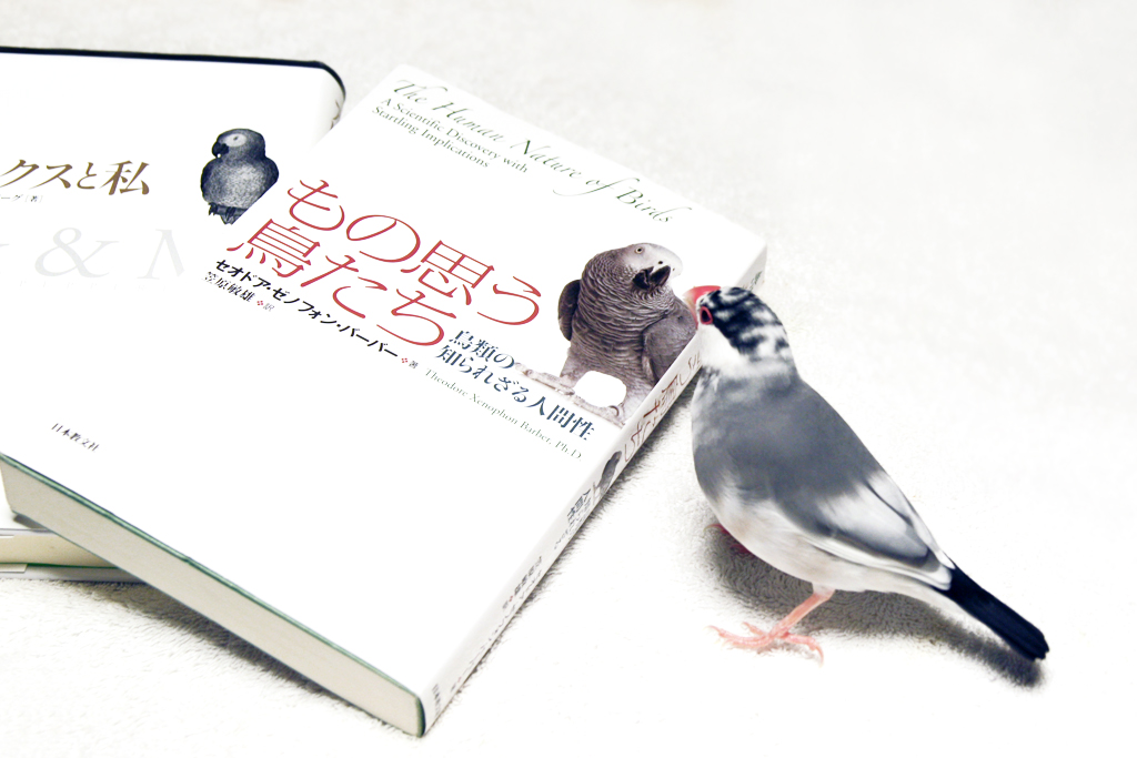 もの思う鳥たち―鳥類の知られざる人間性