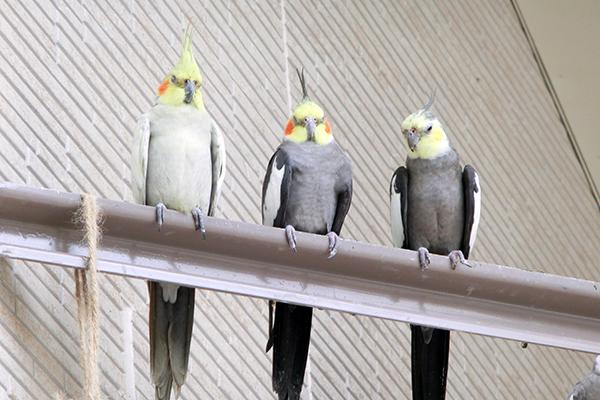 鳥の保護施設「とり村」レポート