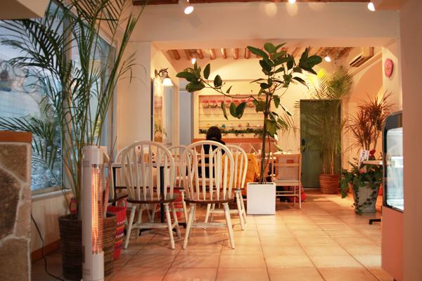 インコと触れ合えるカフェ「ことりカフェ表参道」プレオープンレポート