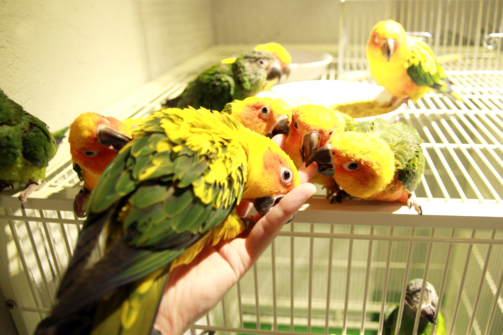 鳥のいるカフェ 浅草店