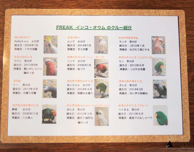 東川口にあるオウムとふれあえる鳥カフェ「フリーク」