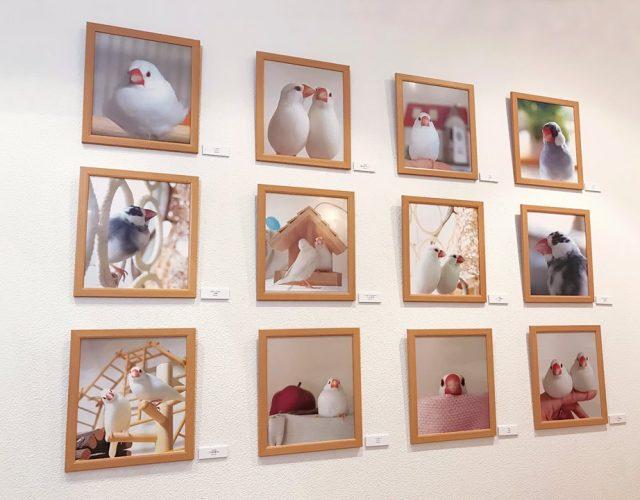 ことりカフェ:torinotorio 2018文鳥カレンダー写真展